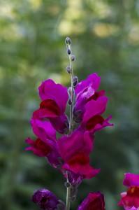 fleur-1-gite-vosges