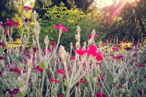 fleur-3-gite-vosges